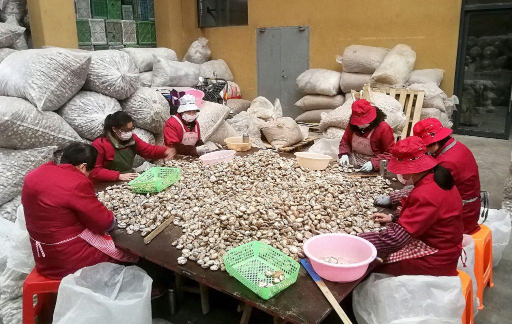 香菇市场内分捡香菇